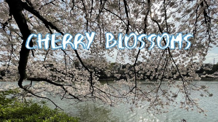 [Vlog] Cycling in Zenfukuji Park with Cherry Blossoms | Tokyo Sightseeing, Japan