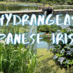 [Vlog] Kyu Shiba Rikyu Garden with Hydrangeas and Japanese Irises | Tokyo Sightseeing, Japan