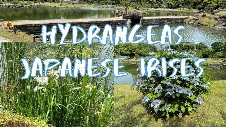 [Vlog] Kyu Shiba Rikyu Garden with Hydrangeas and Japanese Irises   Tokyo Sightseeing, Japan
