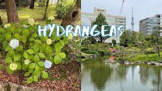 [Vlog] Kyu-Yasuda Garden with Hydrangeas | Tokyo Sightseeing, Japan