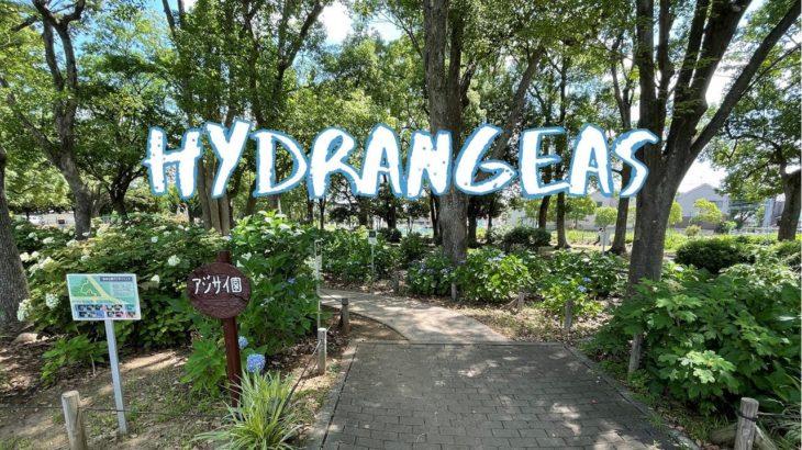 [Vlog] Shinozaki Park with Hydrangeas   Tokyo Sightseeing, Japan
