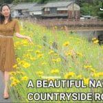 Countryside Road/ Beautiful Nature/ Japan