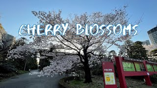 [Vlog] Cycling in National Theatre with Cherry Blossoms   Tokyo Sightseeing, Japan