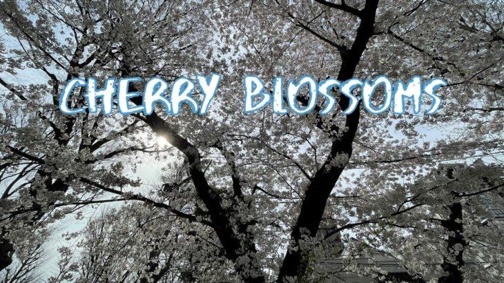 [Vlog] Kiridoshi Park with Cherry Blossoms   Tokyo Sightseeing, Japan