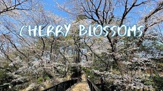 [Vlog] Tamagawadai Park with Cherry Blossoms | Tokyo Sightseeing, Japan