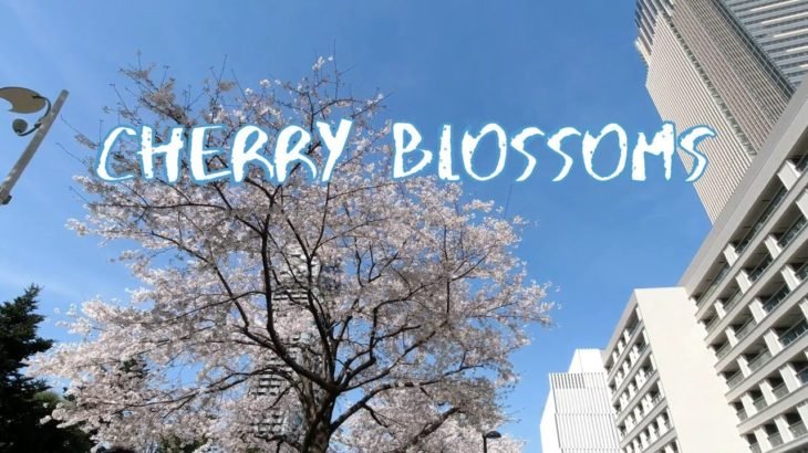 [Vlog] Cycling around Tokyo Midtown with Cherry Blossoms | Tokyo Sightseeing, Japan