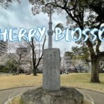 [Vlog] Cycling in Sumida Park with Cherry Blossoms   Tokyo Sightseeing, Japan