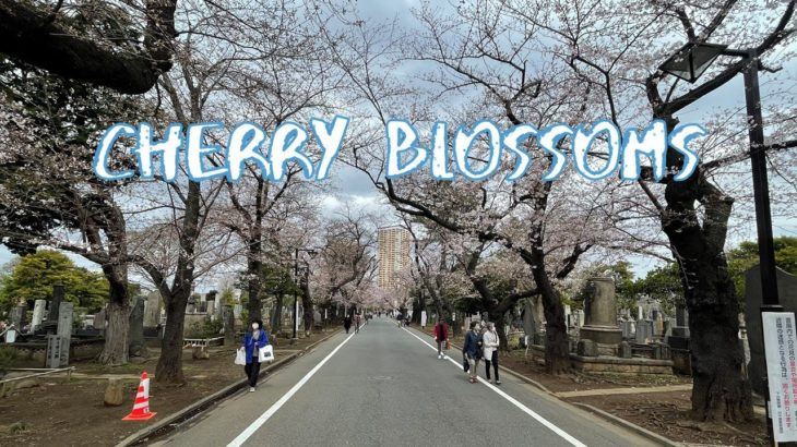 [Vlog] Cycling in Yanaka Cemetery with Cherry Blossoms | Tokyo Sightseeing, Japan