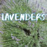 [Vlog] Nakagawa Park with Lavenders   Tokyo Sightseeing, Japan