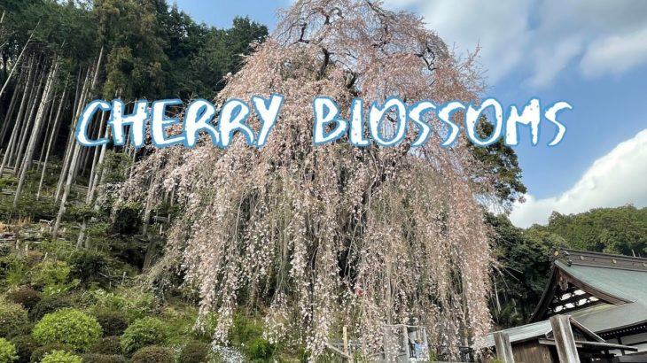 [Vlog] Baiganji Temple (Ome City) with Cherry Blossoms | Tokyo Sightseeing, Japan