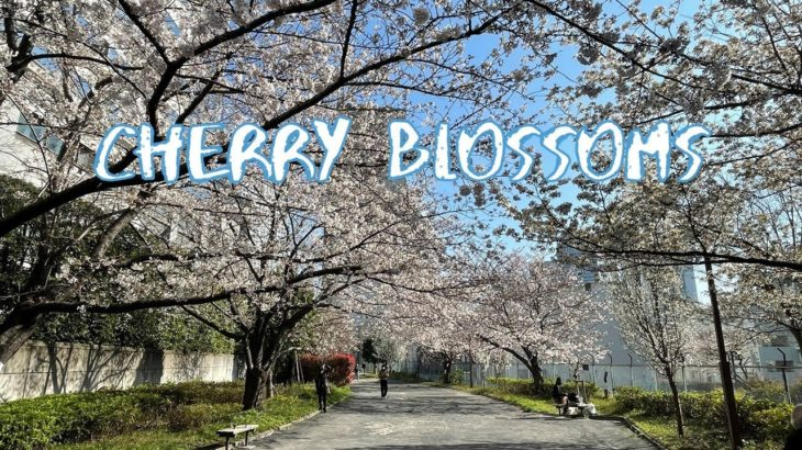 [Vlog] Cycling in Yoyogi Green Way with Cherry Blossoms | Tokyo Sightseeing, Japan