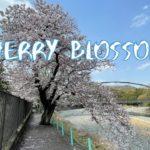[Vlog] Kamanofuchi Park with Cherry Blossoms | Tokyo Sightseeing, Japan
