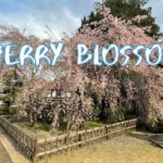 [Vlog] Kongoji Temple (Ome City) with Cherry Blossoms | Tokyo Sightseeing, Japan