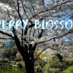 [Vlog] Mohri Garden with Cherry Blossoms   Tokyo Sightseeing, Japan