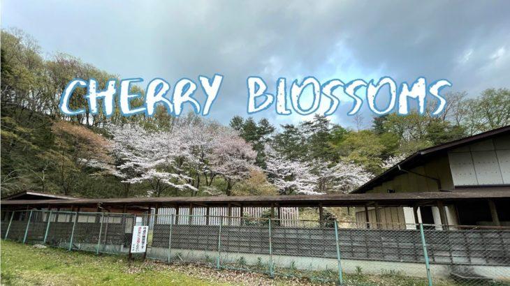 [Vlog] Nagayama Park Japanese Archery Court | Tokyo Sightseeing, Japan