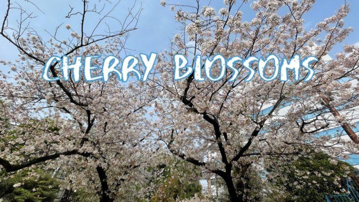 [Vlog] Nippori Minami Park with Cherry Blossoms | Tokyo Sightseeing, Japan