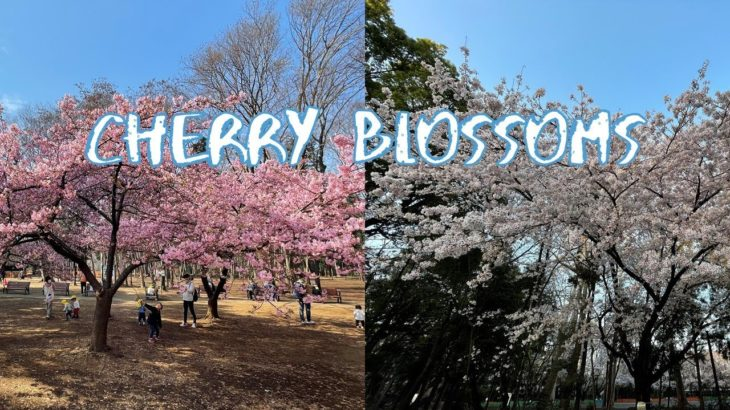[Vlog] Rinshinomori Park with Cherry Blossoms | Tokyo Sightseeing, Japan