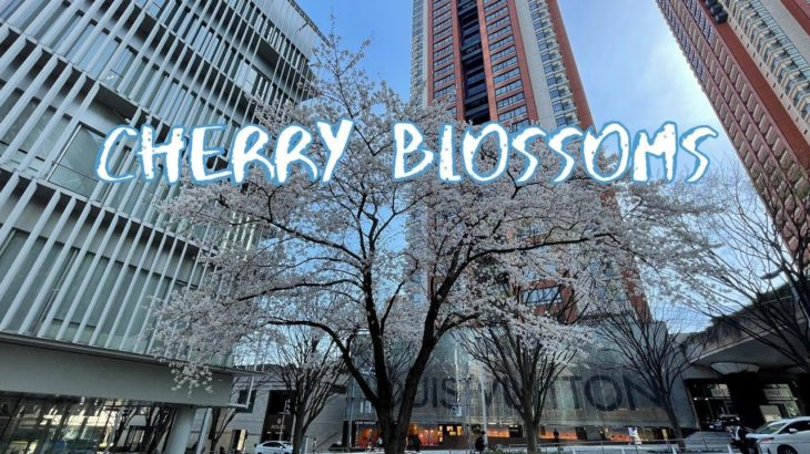 [Vlog] Roppongi Hills Arena with Cherry Blossoms | Tokyo Sightseeing, Japan